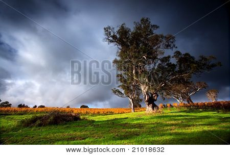 Strong light shines through a storm onto a vineyard