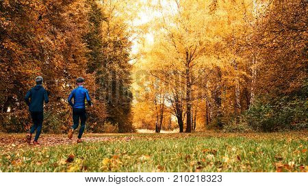 Beautiful forest run