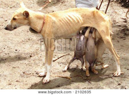 Dog Feeding Her Babies
