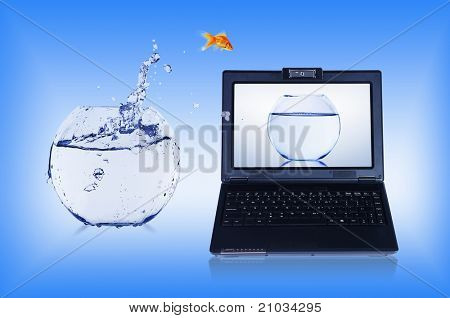 picture of gold fish and laptop computer