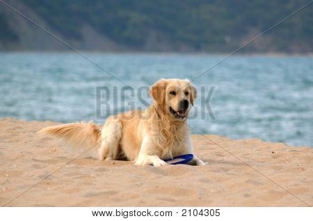 Dog 3