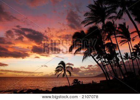 Sunset With Silhouetted Palm Trees
