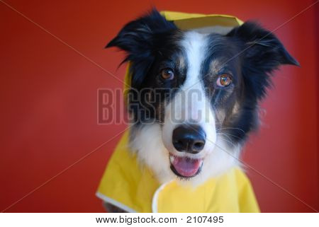 Cute Dog In A Raincoat