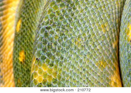 Extreme Closeup Of A Green Tree Python's Scales (macro)