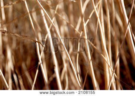 Drygrassclsup