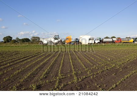 Cornfield And Trucks