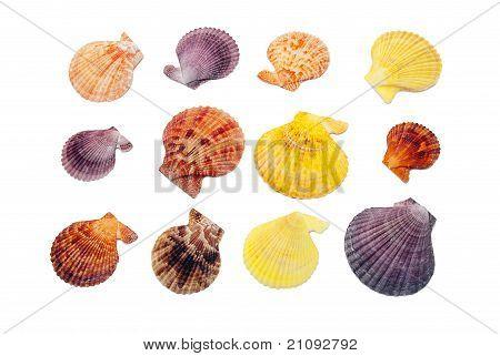 Seashell Set.