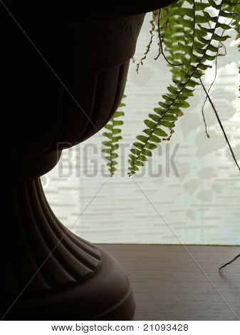 Fern In Cache-pot