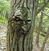 image of face-fungus  - Close up view of a tree node texture as face - JPG
