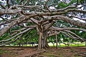 stock photo of royal botanic gardens  - botanical Garden of Peradeniya Kandy - JPG