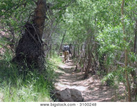 Man Walking Woodland Riverbank