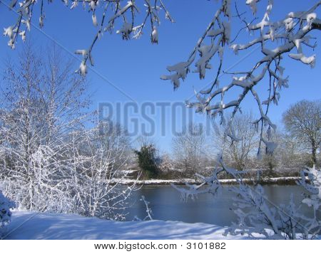 Frozen Lake And Overhanging Trees