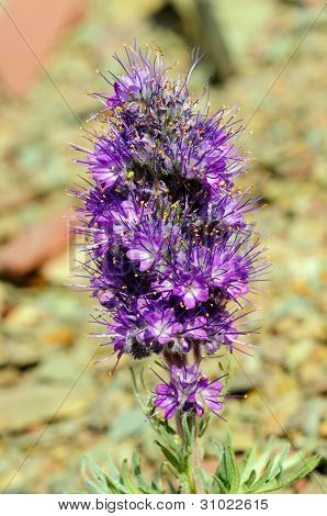 Alpine Wildflower In The Tundra