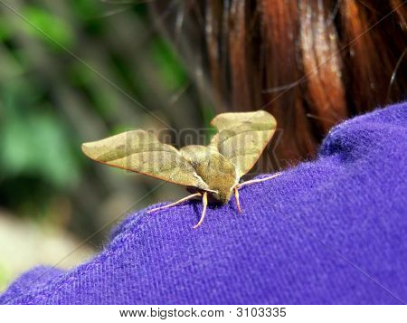 Moth On Shoulder