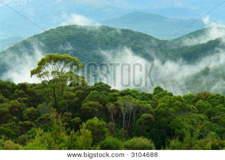 canopy of the rainforest in Tasmania