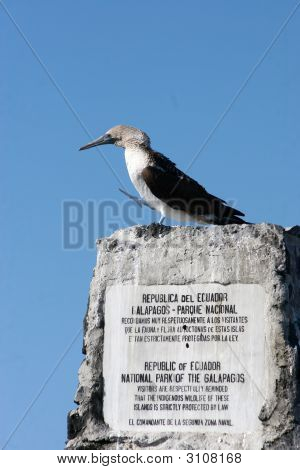 Masked Booby And A Sign, Galapagos