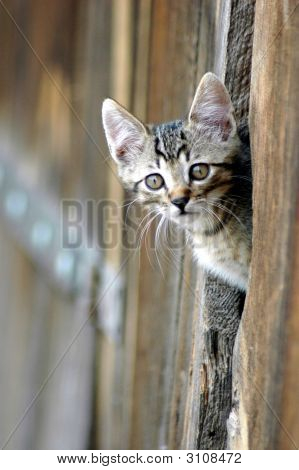 Cat peeking from barn door