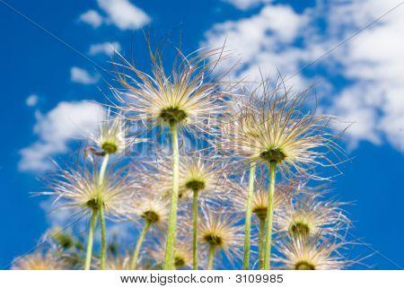 Sky Plants