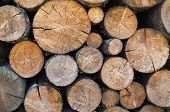 Stack Of Firewood. Woodpile. Wood Logs. Wood For The Winter. Firewood Background. poster