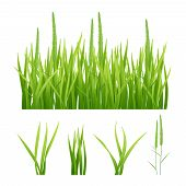 Grass Realistic. Green Nature Vector Pictures Of Grass And Leaves Plantain 3d Objects. Illustration  poster