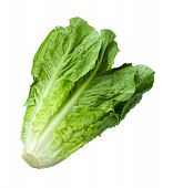 stock photo of crisps  - Romain Lettuce isolated on a white background - JPG
