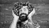 Winery Cheerful Worker. Farmer With Grapes. Winery Concept. Man With Beard Hold Bunch Of Grapes On H poster