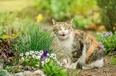 Curious Smile Cat. Cat In The Summer Garden poster