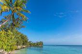 coastline beach seaside of Kizimkazi in Unguja aka Zanzibar Island Tanzania East Africa poster