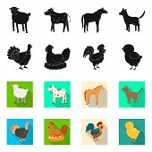 Vector Illustration Of Breeding And Kitchen Symbol. Collection Of Breeding And Organic Vector Icon F poster
