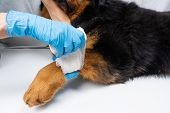 The Vet Bandages The Wound On The Dogs Paw. Treatment Dogs Have The Vet. poster