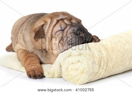 Puppy With A Towel