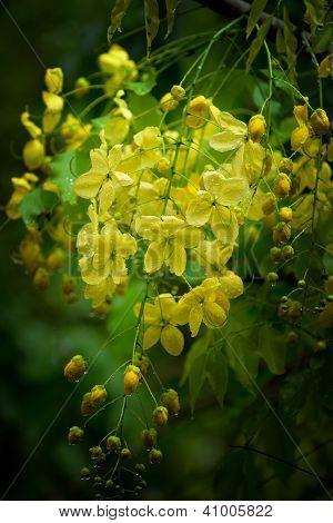 Flowering Tree. Dark Vignette
