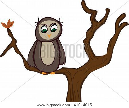 Lone Wise Owl in Autumn Tree