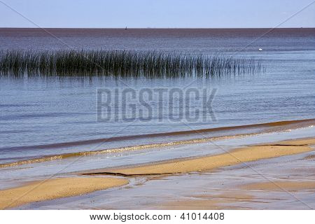 Beach And Grass In Rio De La Plata