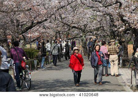 Parque de Ueno, Tóquio