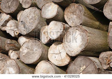 Logs Close Up