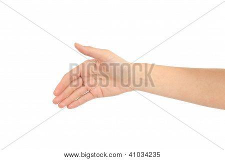 Woman Hand Ready For Handshake