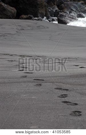 Tracks In Black Sand