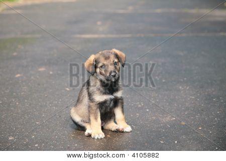 Puppy On Street