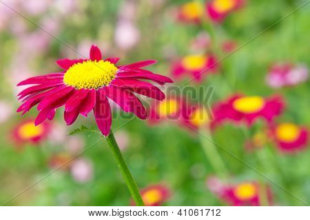 Crimson flower on the natural background.
