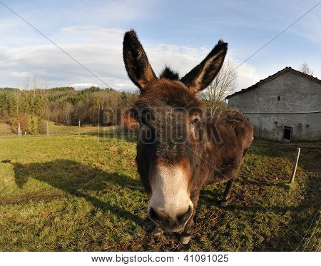 Closeup On A Head Of A Donkey