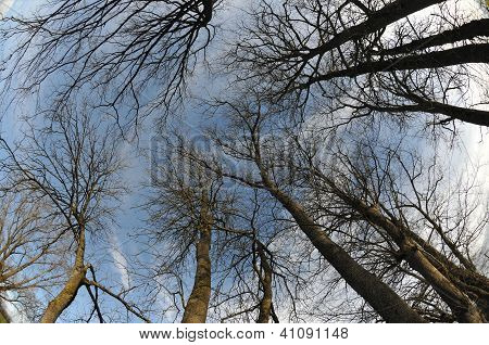 Sky With Trees In A Fisheye Aspect