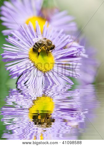 blue flower and bee