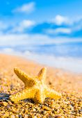 picture of starlet  - Sea Starlet In a Sunlit Space - JPG