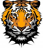 foto of bengal cat  - Vector Image of a Tiger Head with Whiskers - JPG