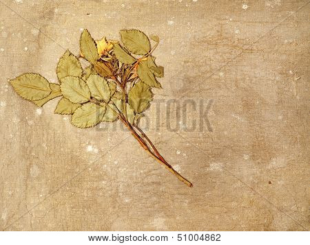 Herbarium On A Old Dirty Canvas.