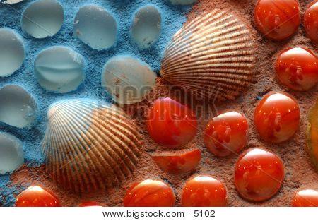Shells_42021