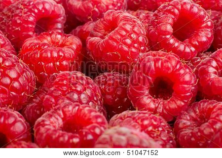 Ripe Raspberries Fruit Background. ?solated On White