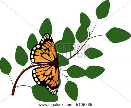 Butterfly On Branch