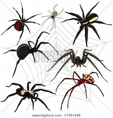 Spiders Set